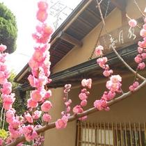 水月庵は四季折々色んな木々やお花に囲まれます。