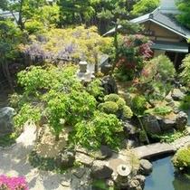 日本庭園 季節のお花【藤の花】