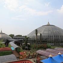 【手柄山中央公園】温室植物園