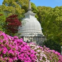 名古山霊苑(ツツジ)