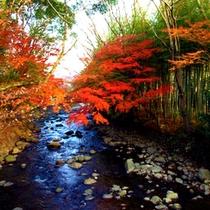*【秋】修善寺の紅葉は風情がありますね!