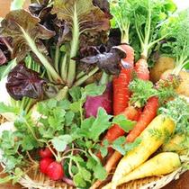 *【食材】自家菜園で採れた野菜の数々を使用致します。