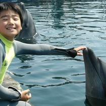 *【イルカ】一緒に楽しく遊んで、思い出作ろう♪