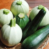 *【食材】瑞々しく色鮮やかな野菜の数々。