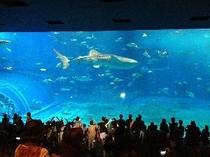 ちゅらうみ水族館長浜(宿舎から車で15分)