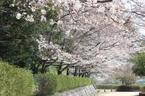 【春】当館周辺の白馬公園