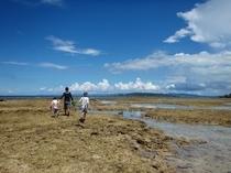 干潮の海を海歩き体験