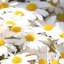*お庭に咲く季節の花々