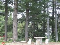 森の癒し空間(森)