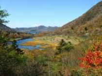 赤城山覚満淵の草紅葉