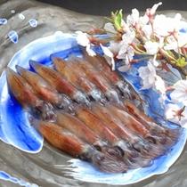 カニ漁が終われば、ホタルイカのシーズン。 浜坂港は、ホタルイカの水揚げも日本一なんですよ。