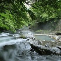 【露天風呂・川湯】川と同じ目線で温泉を楽しめる露天