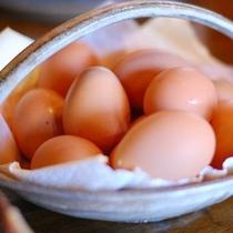 【朝食】とれたて卵
