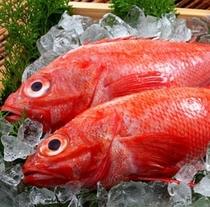 高級魚と呼ばれる『吉次(きんき)』