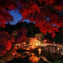 修善寺 虹の郷 紅葉ライトアップ (11月20日~30日予定)