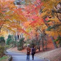 虹の郷 紅葉時期の風景 (みごろ11月中旬~12月中旬)