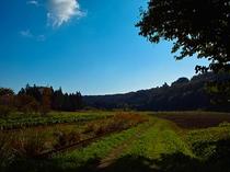 田舎ならではの景色