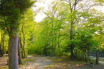 敷地内の風景