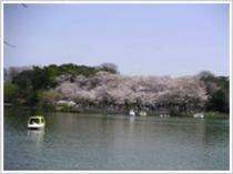 101110観光・洗足池公園