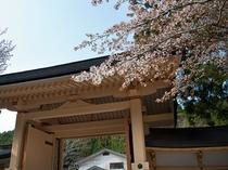 山門桜4x3