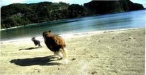 目の前の砂浜で追いかけっこ