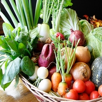 自家栽培 採れたて野菜