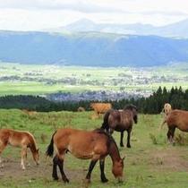 放牧風景④2012年8月撮影