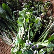 *春の恵みの山菜