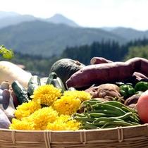 *新鮮な地元産の野菜