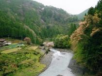 小又川の渓流