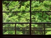 【新館和室】からの対岸の山を望む