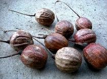 ハンカチの木の種