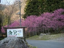 東沢外観1