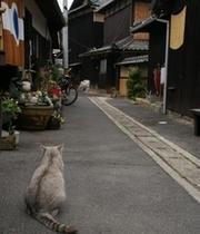 民宿の通り