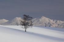 冬の富良野・美瑛 8