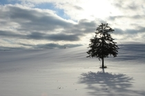 冬の富良野・美瑛 4