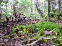 森はキノコがいっぱい