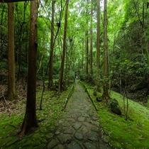 犬鳴山不動への道1
