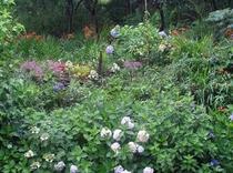 庭の花小さい判