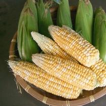 【自家製野菜】畑でとれる季節の新鮮な野菜もご賞味ください