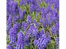 【富良野】色鮮やかなお花が咲いています
