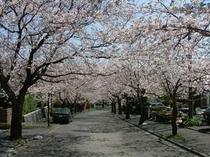 周辺には桜並木がズラリ!ぽかぽかお散歩も気持ちいい