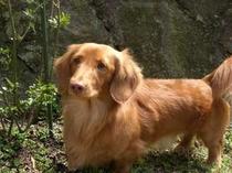 Happydaysの看板犬、ネロです!