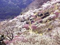 梅の宴【2月上旬~3月下旬】