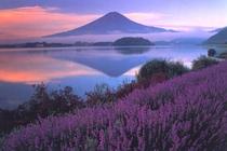 大石公園からの富士山とラベンダー