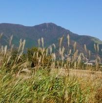 *すすきの草原から金時山です!