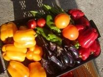 自家製の野菜