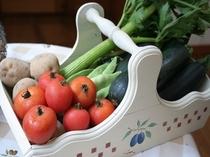 おいしい朝取り新鮮野菜②