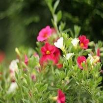 ガーデン 花