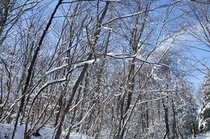 冬のモータウン②